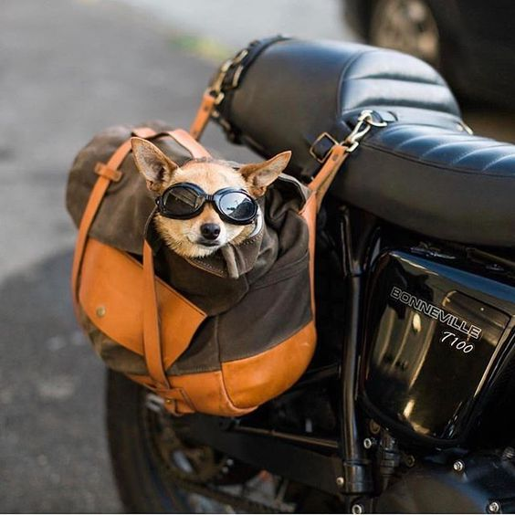 dog-side-bag.jpg